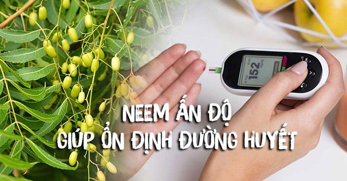Cây neem ấn độ giúp ổn định đường huyết