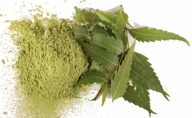 Dùng bột lá neem đánh răng giúp răng trắng sáng, chắc khỏe