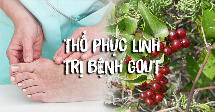 Công dụng thổ phục linh trong điều trị bệnh Gout