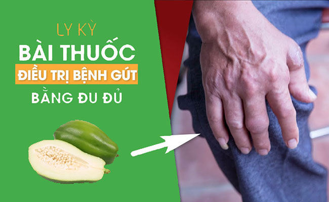 Bài thuốc chữa Gout bằng đu đủ xanh