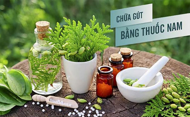 Phương pháp chữa bệnh gout bằng thuốc nam