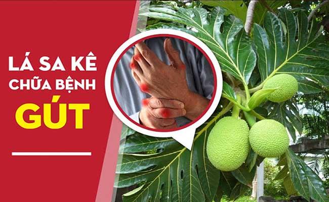 Lá sa kê có tác dụng tuyệt vời trong điều trị bệnh gout
