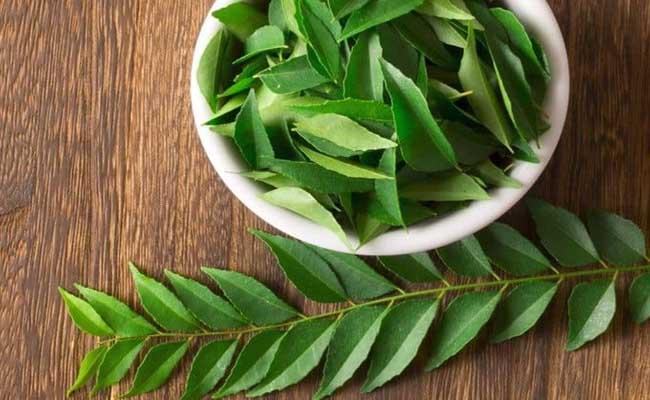 Lá neem Ấn Độ kiểm soát đường huyết hiệu quả