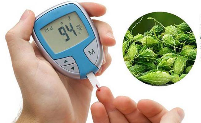 Mướp đắng rất tốt cho người bệnh tiểu đường