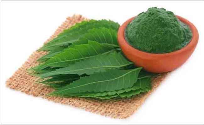 Giảo cổ lam là một trong những cây thuốc quý chữa bệnh tiểu đường