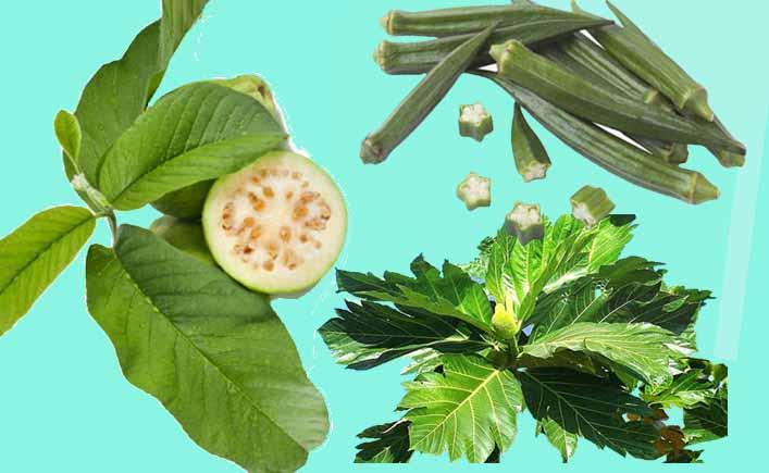 Kết hợp lá ổi, đậu bắp, sa kê để điều trị bệnh tiểu đường