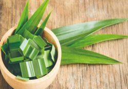 Lá dứa chứa nhiều thành phần có tác dụng tốt cho người tiểu đường