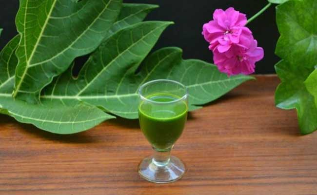 Nước lá đu đủ chữa bệnh đau dạ dày và giải nhiệt cho cơ thể