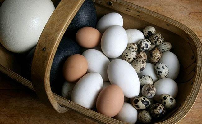 Đau dạ dày có ăn trứng được không