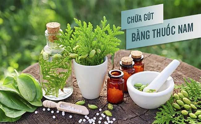 Các bài thuốc nam chữa gout đang được người bệnh quan tâm
