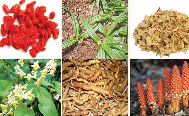 Một số loại thảo dược tự nhiên trị yếu sinh lý khá tốt