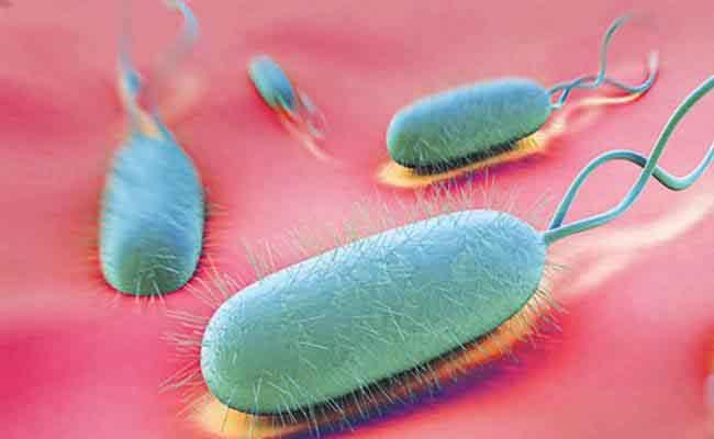 Vi khuẩn HP có khả năng lây nhiễm qua nhiều con đường