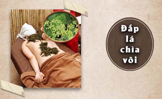 Lưu ý sử dụng cây chìa vôi đúng cách để trị bệnh