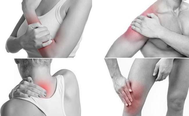 Cẩu tích trị đau nhức xương khớp hiệu quả