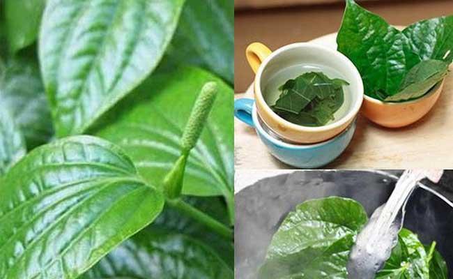 Sử dụng lá lốt đúng cách giúp chữa ngộ độc thực phẩm hữu hiệu