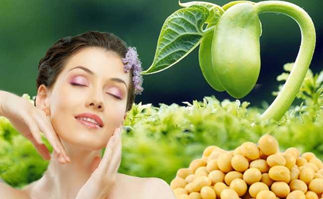 Mầm đậu nành được chuyên gia đánh giá cao trong việc bổ sung nội tiết tố