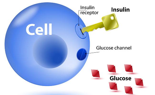 Kháng insulin có thể xuất hiện do nhiều nguyên nhân
