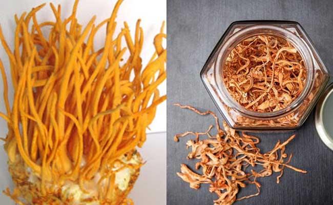 Đông trùng hạ thảo sấy khô đang được ưa chuộng