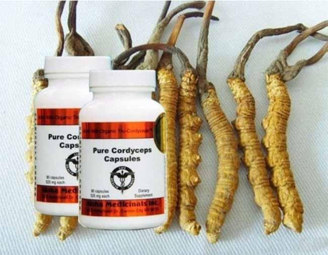 Đông trùng hạ thảo Pure Cordyceps là gợi ý cho nhiều người