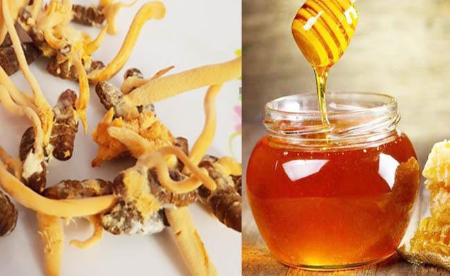 Đông trùng hạ thảo ngâm mật ong giúp làm giảm cholesterone xấu