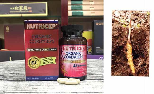 Đông trùng hạ thảo của Mỹ - Nutrisep có nhiều lợi ích cho sức khỏe