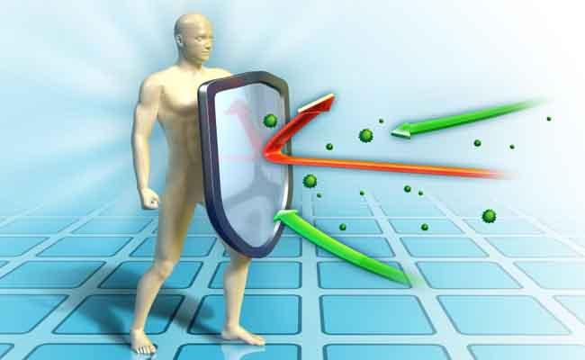 Đông trùng hạ thảo giúp tăng cường hệ miễn dịch và sức đề kháng của cơ thể