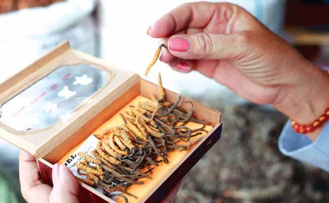 Tại Việt Nam đa dạng các loại Đông trùng hạ thảo đến từ nhiều thương hiệu