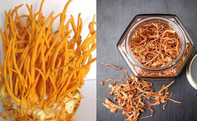 Đông trùng hạ thảo là thành phần chính của sản phẩm Royal Gold